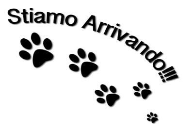 IN ARRIVO CUCCIOLATA DI LABRADOR RETRIEVER CIOCCOLATO